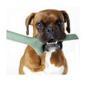 Royal canin pienso para perros Medium adult 7+