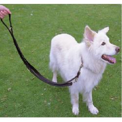 Limpiador externo natural de oídos para perros