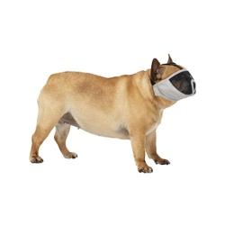 Arnes acolchado para perros