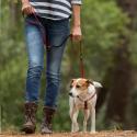 Cama para perros y gatos perritos azules