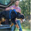 Colchoneta para perros y gatos Gris Pana
