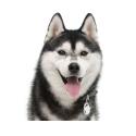 Alpha spirit canine comida húmeda adult pato con kiwi lata