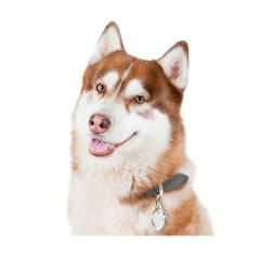 Alpha spirit canine adult pescado monodosis