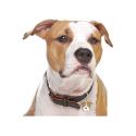 Alpha Spirit Canine Humeda Pato + Kiwi 100% natural sin aditivos