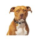 Alpha Spirit Canine Humeda Salmon + Arandanos 100% natural sin aditivos