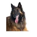 Alpha Spirit Canine Humeda Jabali + Tomillo 100% natural sin aditivos