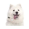 Alpha Spirit Canine Humeda Pollo + Curcuma 100% natural sin aditivos