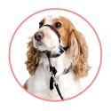 Cronicare complemento nutricional para perros y gatos