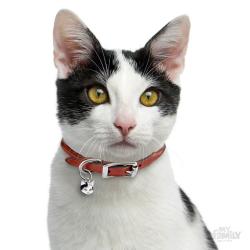 Tabergat Champu espuma seca para gatos 150 mls.