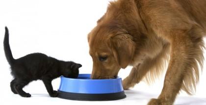 Dieta perro gato