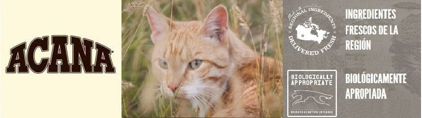Acana Pienso para gatos