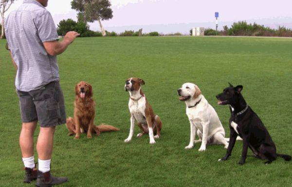 Accesorios para adiestramiento del perro