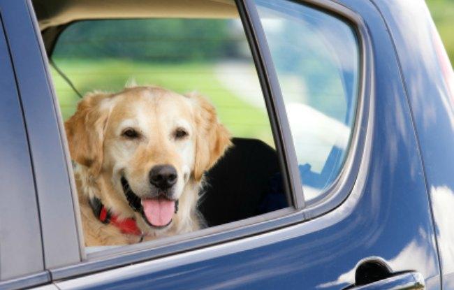 Accesorios para viaje para perros
