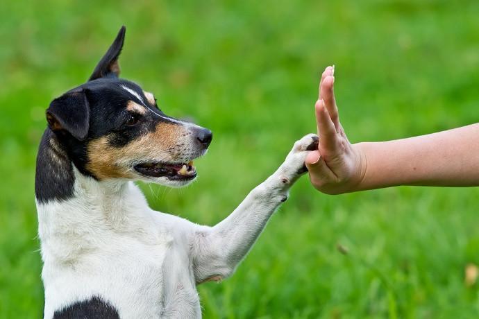 Adiestramiento del perro