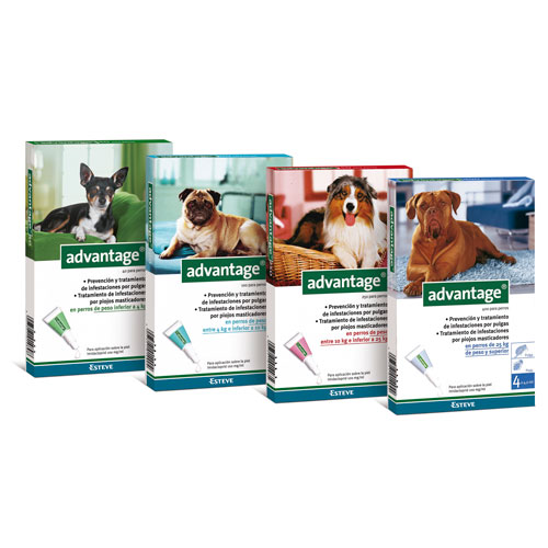 Advantage antiparasitos para perros