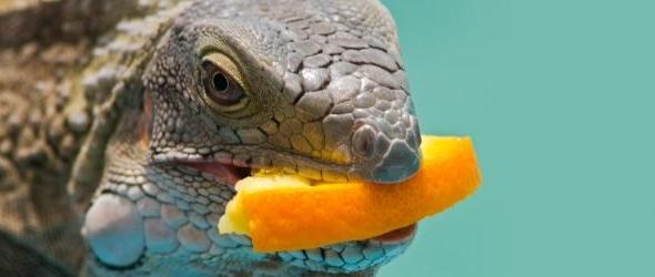 Alimentacion complementaria para reptiles