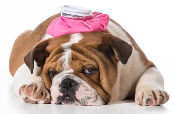 Antiinflamatorios para perros