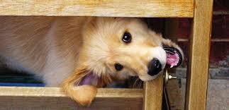 Antimordeduras para perros