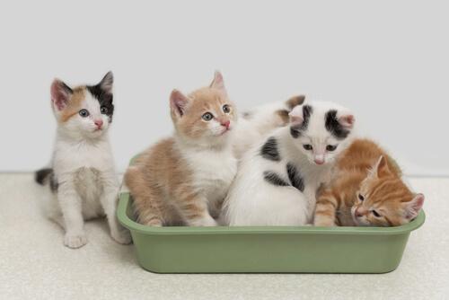 Arena de maiz y vegetal para gatos