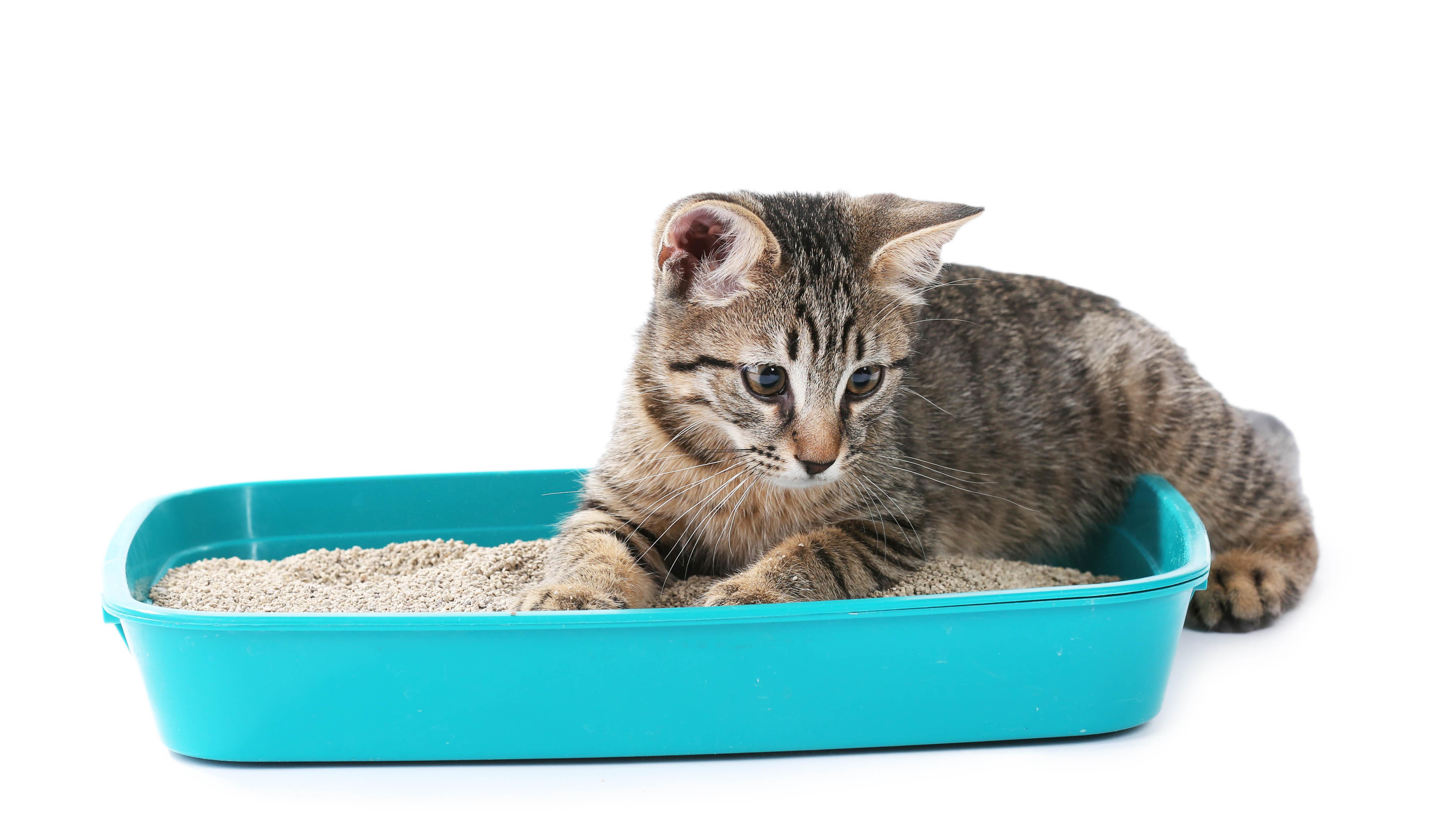 Arenas higienicas para gatos