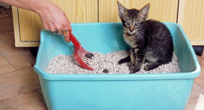 Areneros para gatos y bandejas higienicas