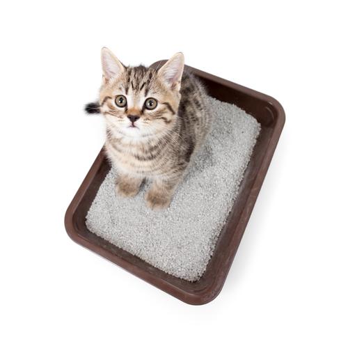 Bandejas y areneros no cubiertos para gatos