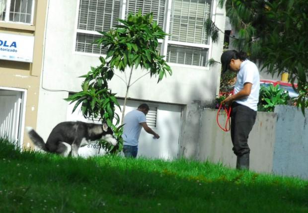 Bolsas y dispensadores excrementos para perros