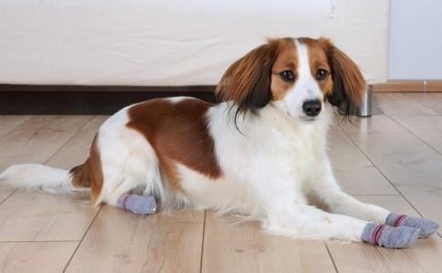 Calcetines para perros
