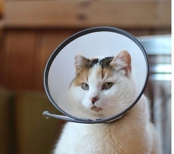 Campana para gatos