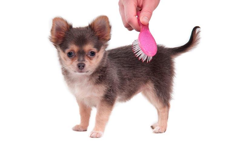Cepillos y peines para cachorros
