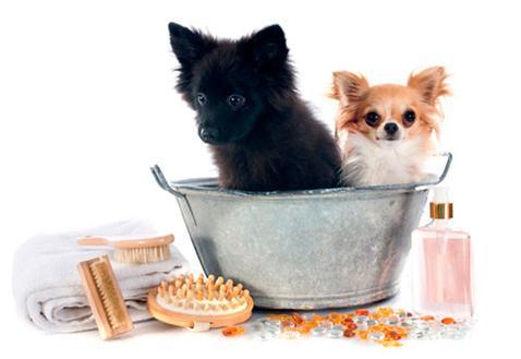 Champús específicos para perros