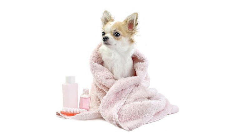 Champus antiparasitarios para perros