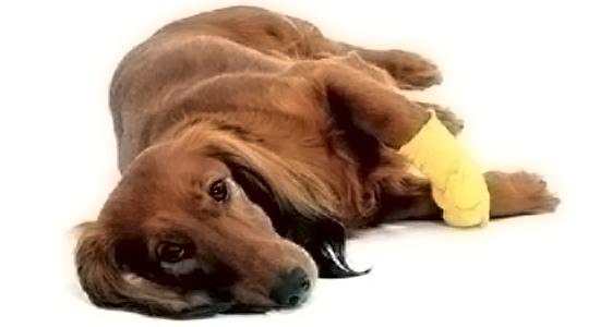 Cicatrizantes y Antiinfecciosos para perros