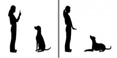 Collar adiestramiento para perros