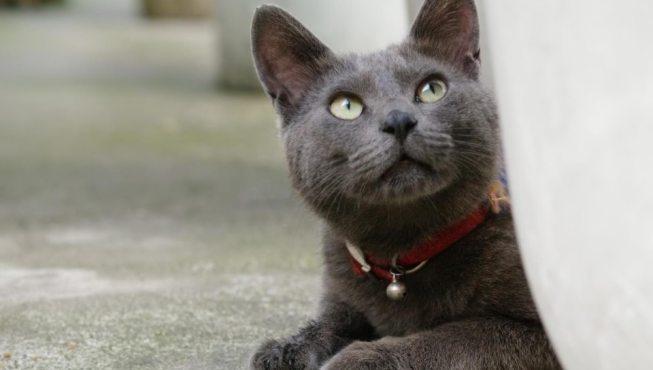 Collares antiparasitarios para gatos