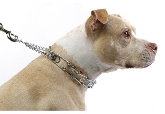 Collares de castigo para perros
