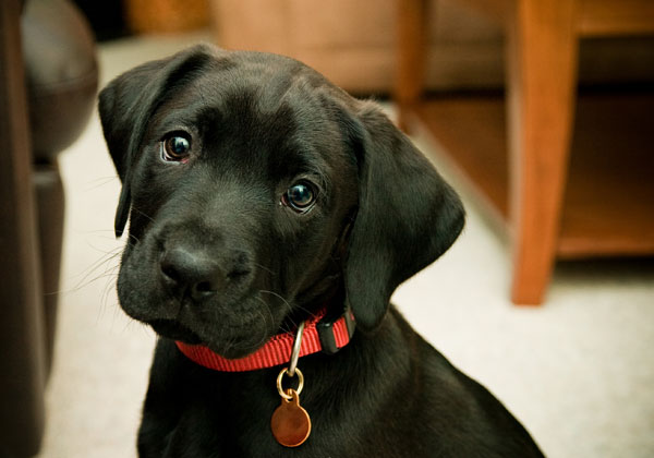 Collares de nylon para perros