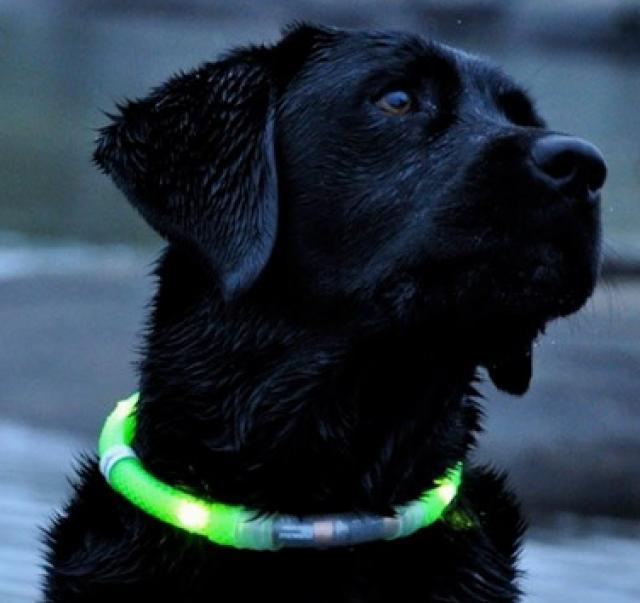 Collares luminosos para perros petclic for Collares para perros