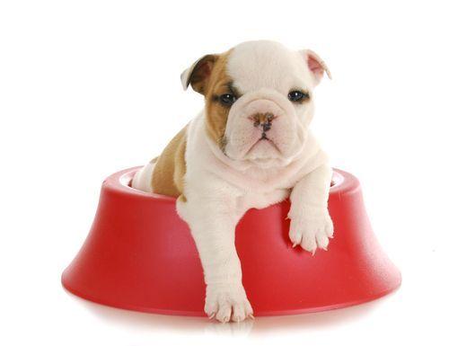 Complementos y nutrición para cachorros