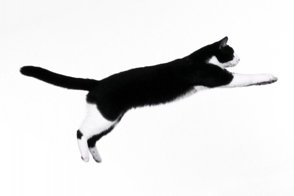 Condroprotectores para gatos