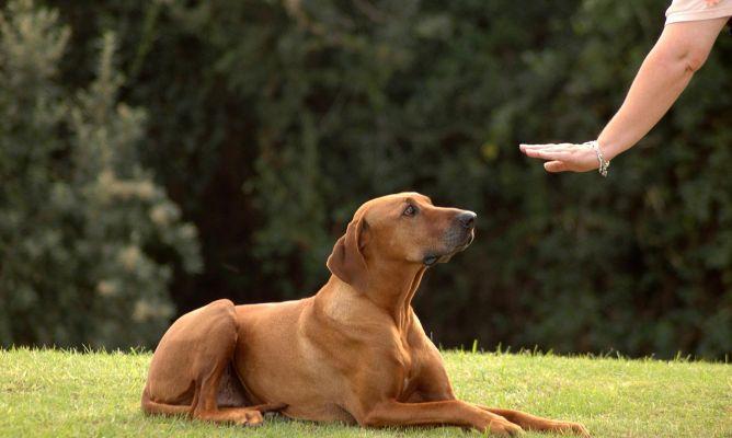 Conducta y educacion del perro