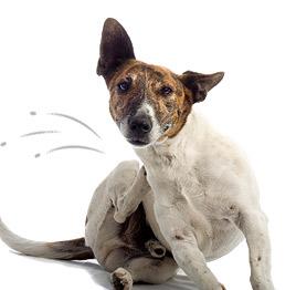 Contra pulga y garrapata para perros