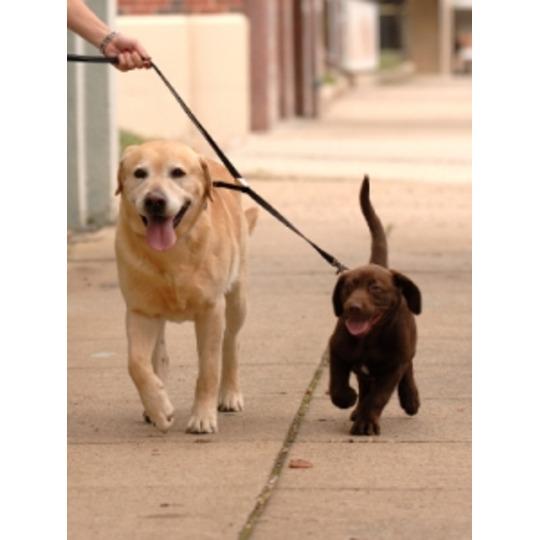 Correas dobles para dos perros