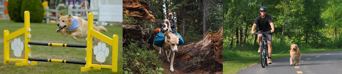 Deportes, ocio y actividades para perros