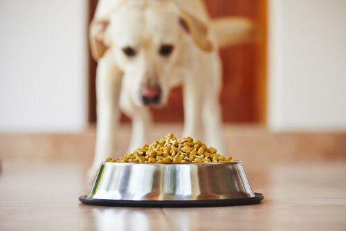 Dietas para perros con problemas de Intolerancia alimentaria