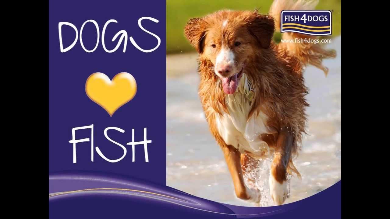 Fish4Dogs pienso para perros