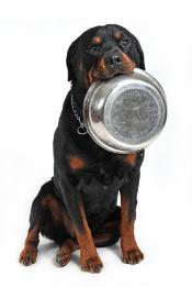 Pienso para Rottweiler