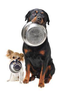 Piensos economicos para perros
