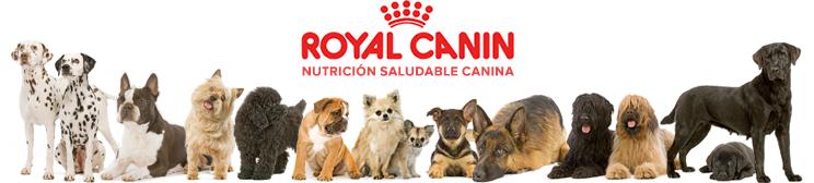 Royal Canin Pienso para perros