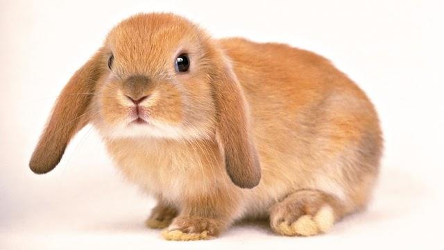 Tienda para Conejos, productos para conejo